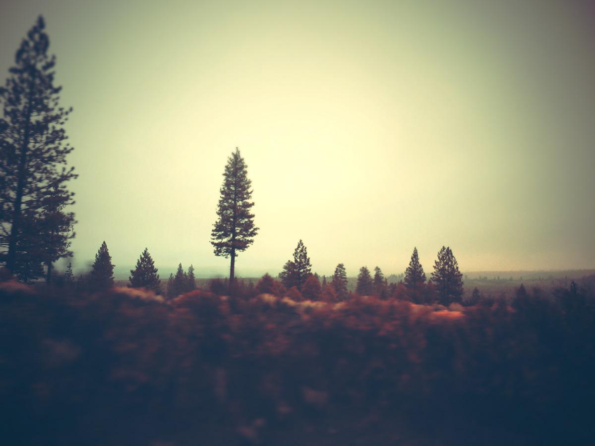 Adobe Portfolio american landscape Landscape Nature trains trees