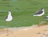 Stick Leg Birds