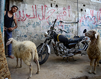 Dead Living ( Gaza Strip )