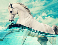 Horse in the sea