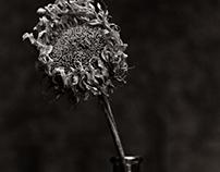 flori neri II
