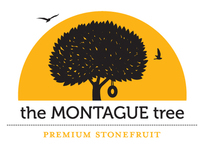 Identity & Packaging - Montague
