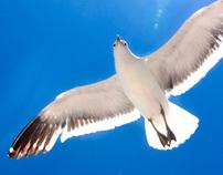 Sun Sea and the birds
