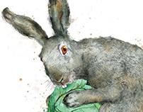 Rabbit | for «Vokrug Sveta» magazine