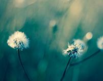 Macro Flowers 2