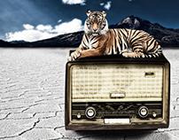 Tiger in desert
