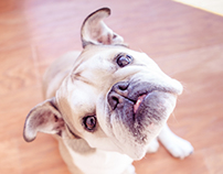 Bulldog Moments