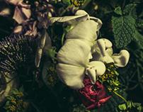 Rosebuddy