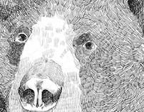 Bears & Deers