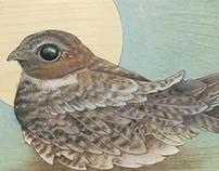 Ornithology Series