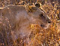 Wildlife Thanda 3