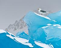 Los colores del Ártico