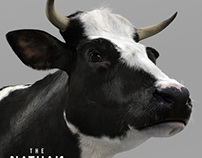 Adult Holstein Cow 3D Model