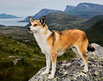 The Shepherd's Realm Volume II: Norway