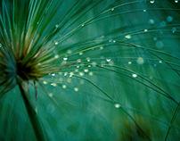 Verde-metamorfosis