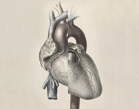 Anatomical translation of human feelings