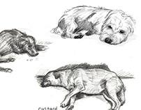 Dog Sketches