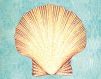 Ilustraciones del mar