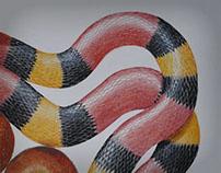 Serpente do Paraíso