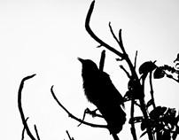 birds shadows