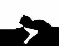 koty/cats