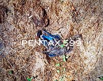 Pentax 599 | Photography