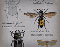 Bug Collection - Illustrations & Sketches