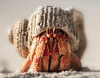 My little friend, Maldivian crab