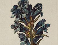 Flora Danica