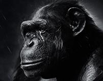 Waiting for Godot - Desktopography 2013