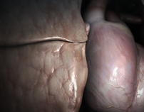 3d animated heart & lung