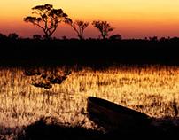 Okavango Golden Hour