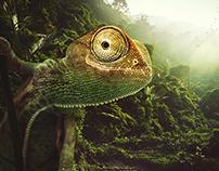 The cheerful chameleon // Desktopography 2013