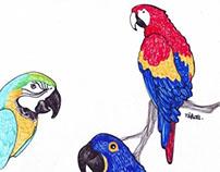 Parrots :)