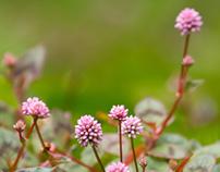 Atmósfera verdi-rosa