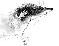 sketches, animals