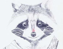 raccoon drawing-test for illustration