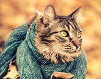Cats in Scarves