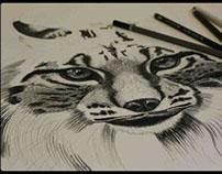 Desenho Animais // Drawing Animals