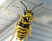 Scotts Wasp