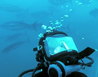 Southern Bluefin Tuna Association
