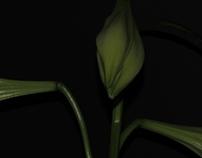 Time-laspe bloom test
