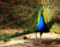 Birdin'