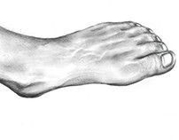 Meu pé