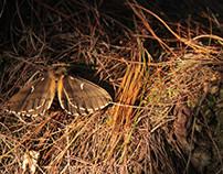 Life & death of a moth