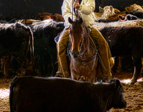 Cutting Horses - The Ulitmate Equine Athletes