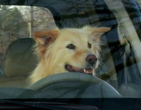 Subaru - Dog Tested