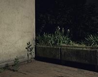 /Night/Blossom/