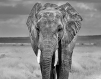 Black and White Africa