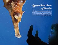 Underwater World Langkawi Ads concept